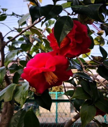 「春の花」
